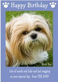 "Shih Tzu-Happy Birthday - ""From The Dog"" Theme"